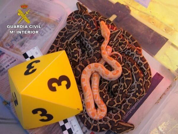 guardia civil detenidos especies animales comercio