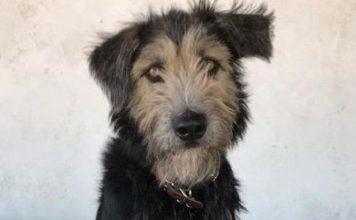 perro Monte nueva estrella de Disney dama y vagabundo (Personalizado)
