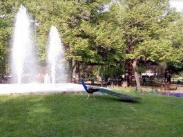 Parque de Quevedo en León (Personalizado)