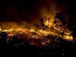 amazonas incendio grave selva amazonica