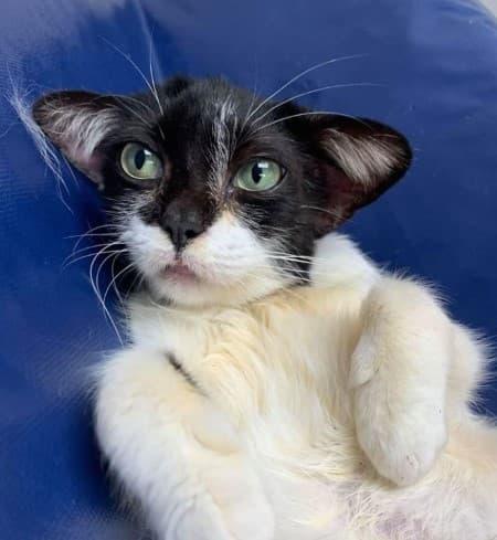 gato parecido personajes star wars harry potter