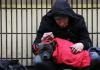 Atención veterinaria gratis para los perros vagabundos de León