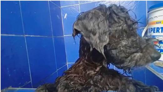 Un perro es arrojado a la alcantarilla con los ojos pegados para que no pudiera seguir a su dueño a casa