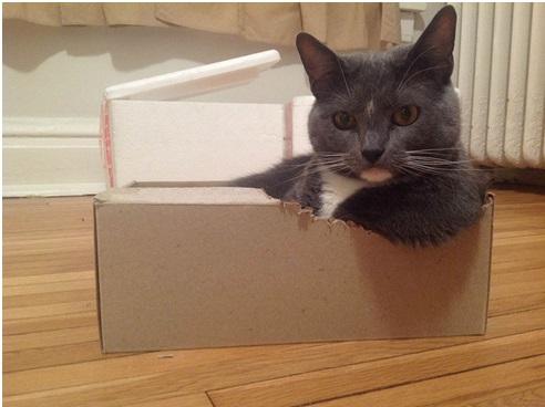 Resulta que a los gatos les encantan las cajas por este motivo