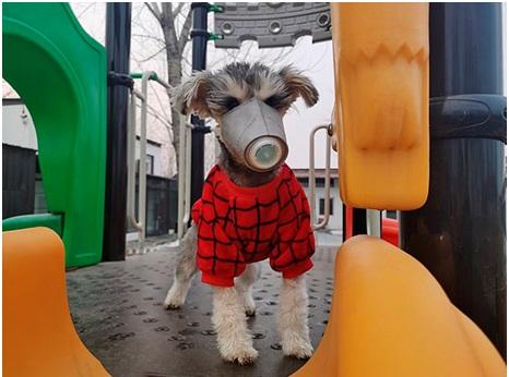 China ordena a las personas que se deshagan de sus mascotas por temor a contraer el coronavirus