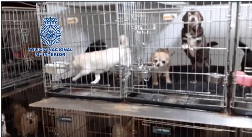 Rescatan a 270 perros de criaderos ilegales en España