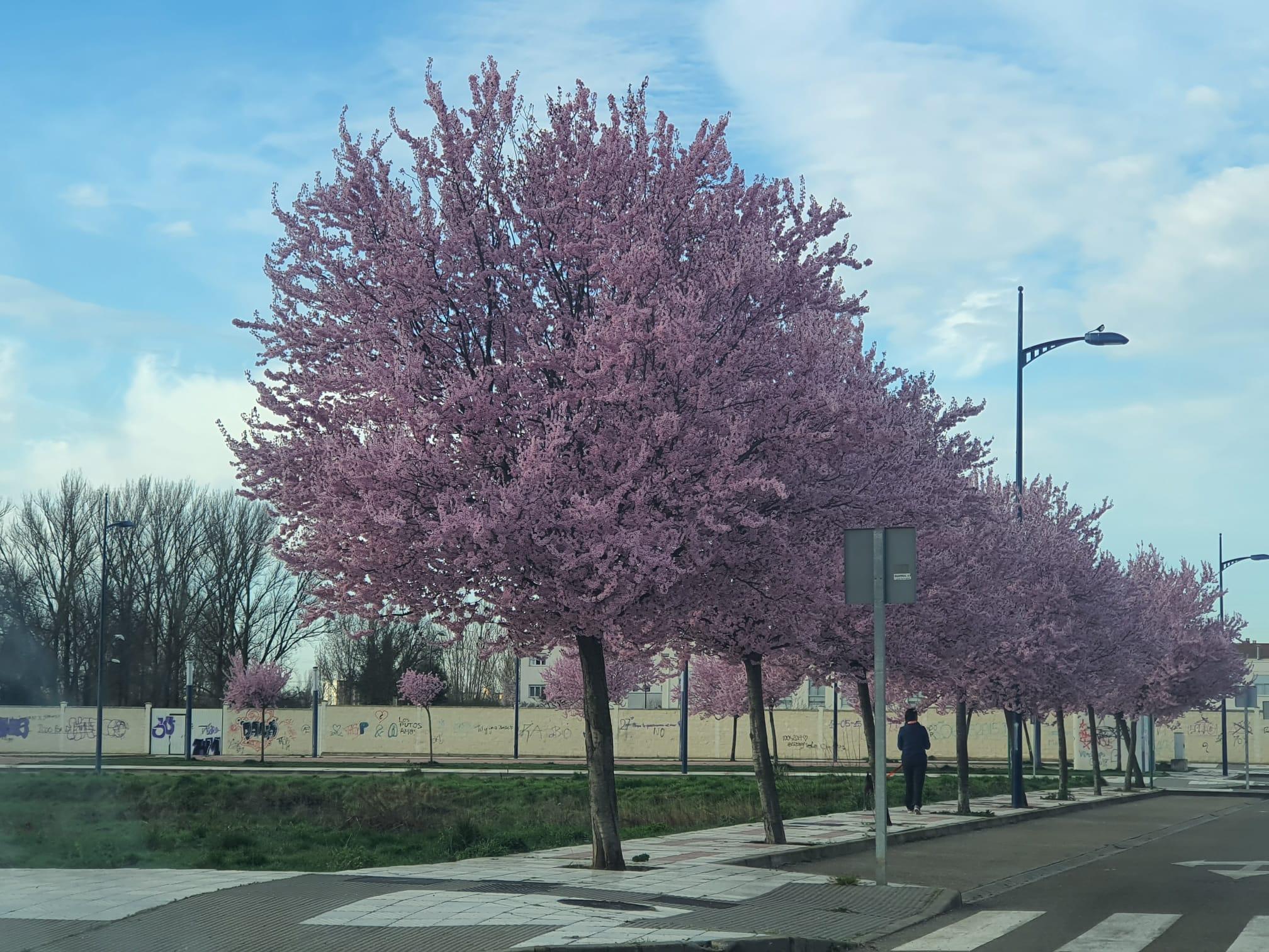 Conoce el significado del árbol del amor