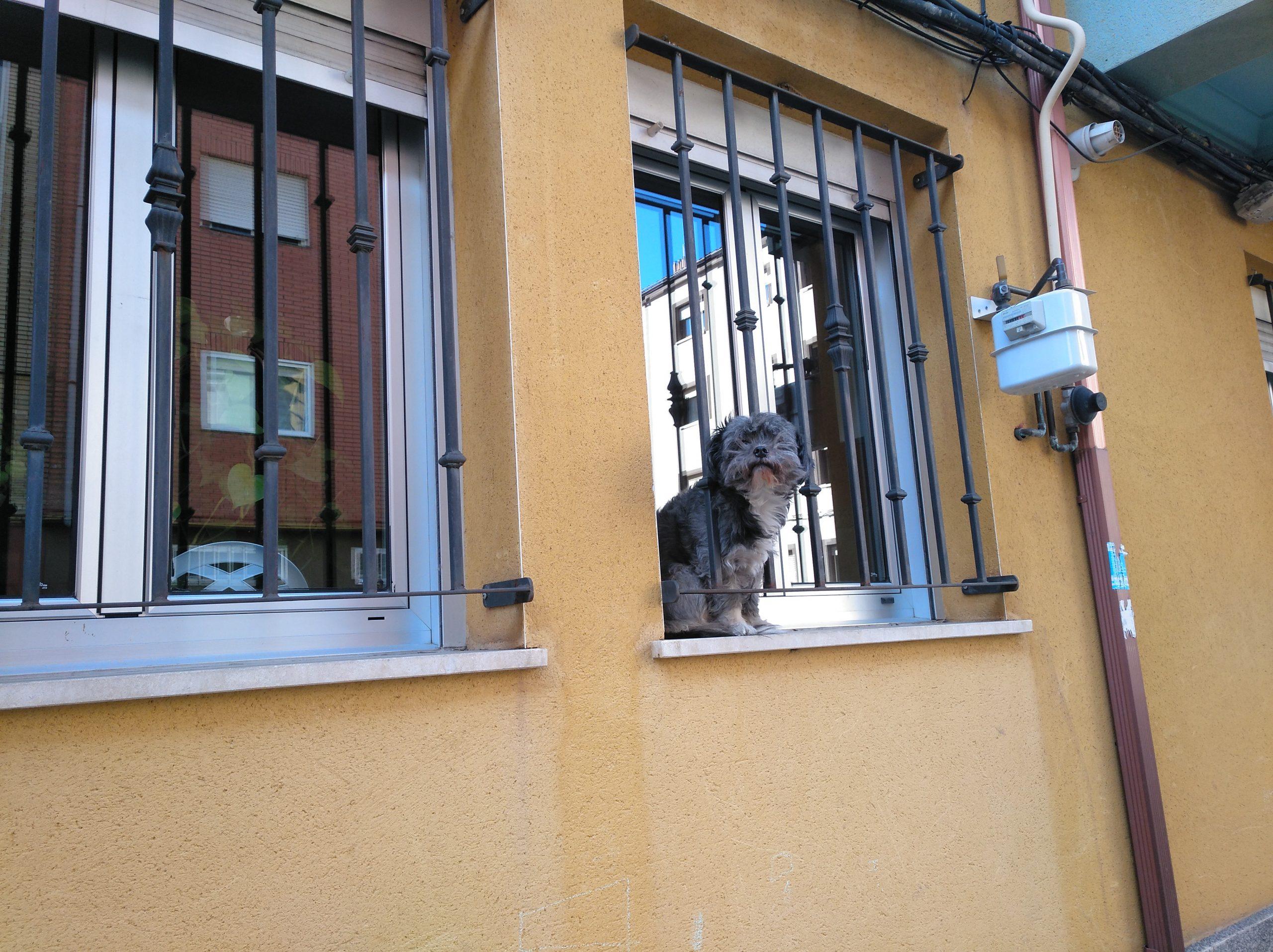 Posible maltrato animal a plena luz del día en la Avenida Doctor Fleming