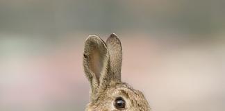 Ir a cazar conejos, ya no es excusa para salir de casa en estado de alarma