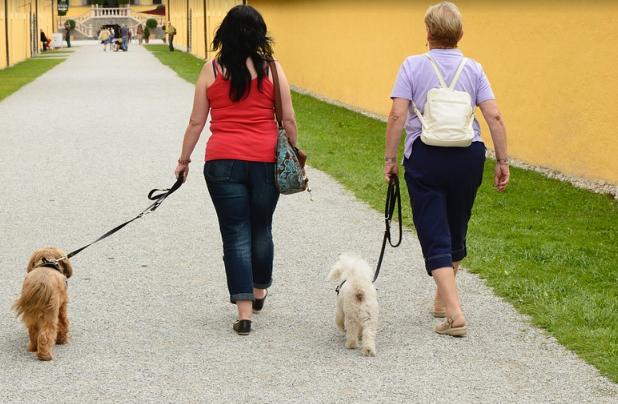 Urgente aclaración de normas para pasear a tu perro en Estado de Alarma