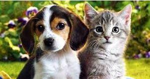 El coronavirus y nuestras mascotas: consejos e información