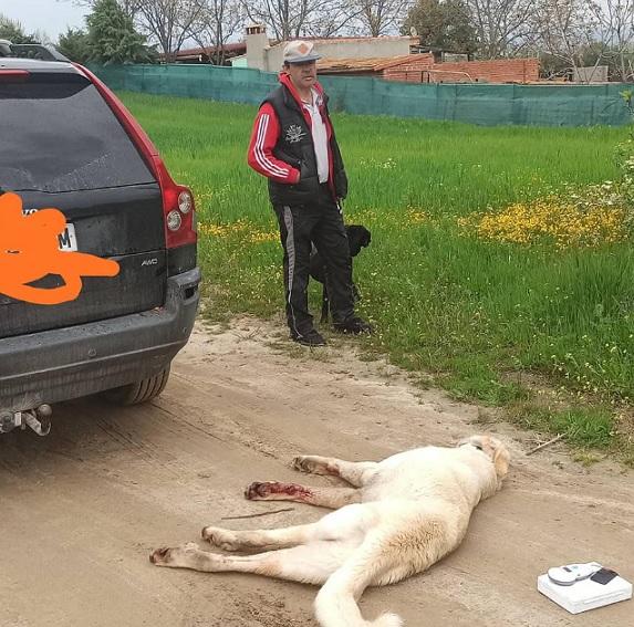 Una familia arrastra a su perro con el coche hasta matarlo