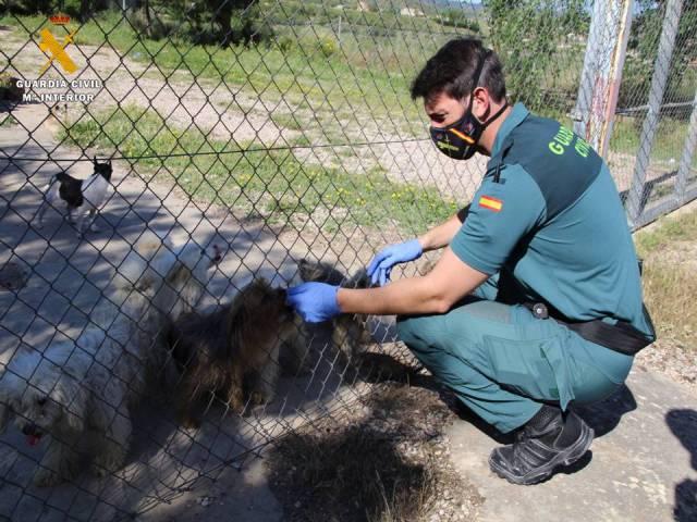 544 perros en condiciones deplorables en el interior de jaulas para conejos