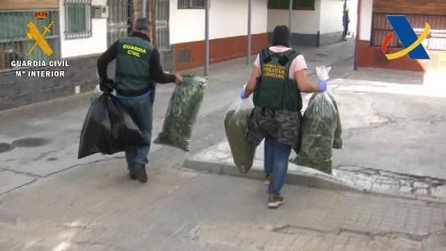 Una organización dedicada al blanqueo de capital del tráfico de marihuana