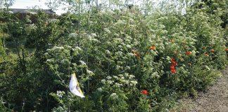 Proponen una reforma en San Andrés para evitar residuos sanitarios