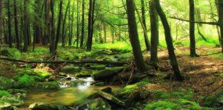 Bonificación con el 90% por la concesión de licencia ambiental