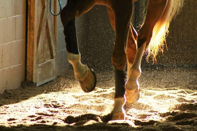 ESPECTÁCULO: Como bailan los caballos españoles