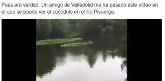 top 10 memes cocodrilo del río Pisuerga