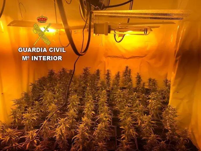 marihuana Congosto