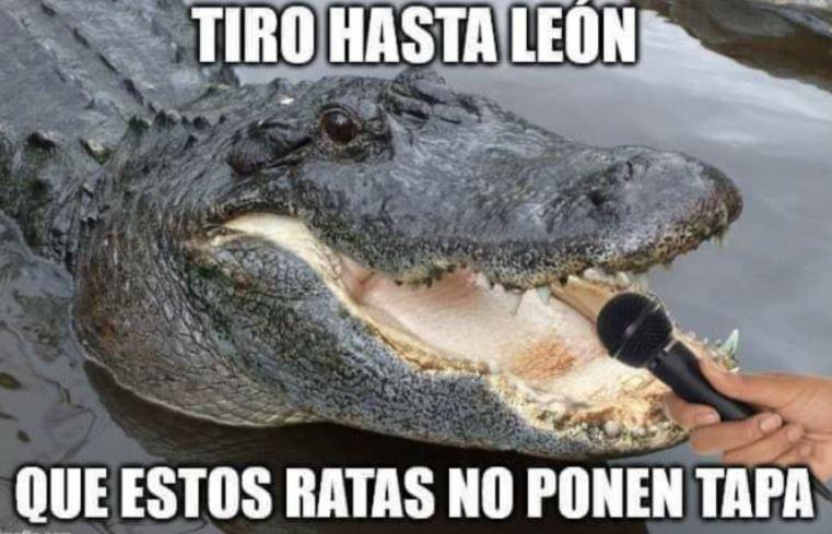 El cocodrilo podría estar en el León, por qué en Valladolid no le dan tapa