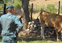 Guardia civil detenidos dos ganaderos en Luna