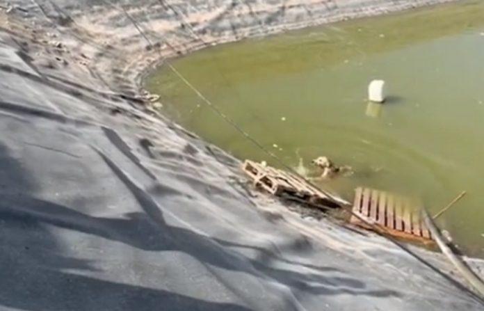 VÍDEO| Angustioso rescate de un perro caído a una balsa de agua