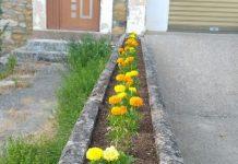 ladrón de flores de boñar