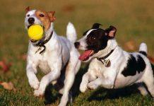 Nueva zona de esparcimiento para perros en Trobajo