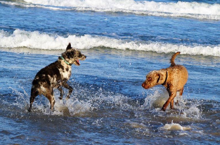 TOP de las playas para perros cerca de León