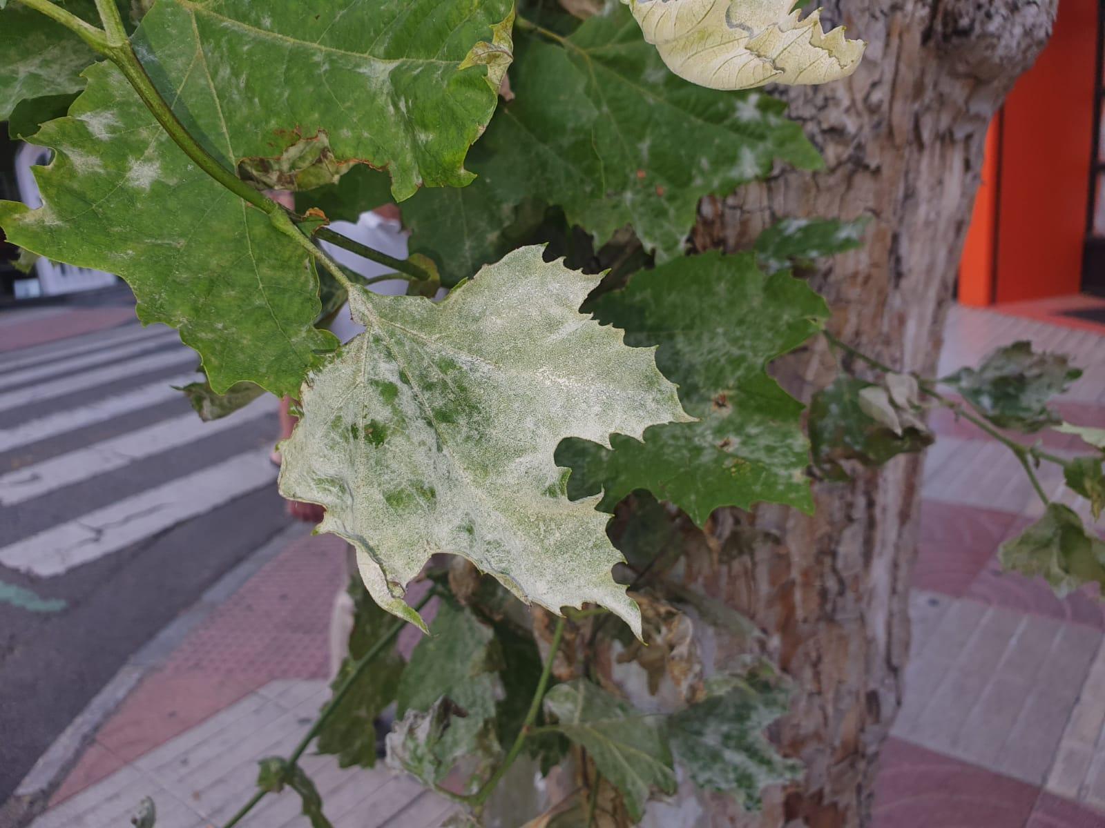 árboles de León