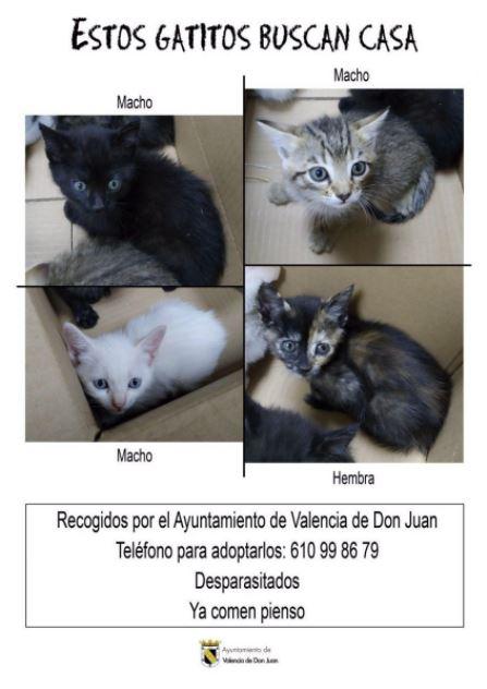 adopta uno de los cuatro gatos en valencia de don juan