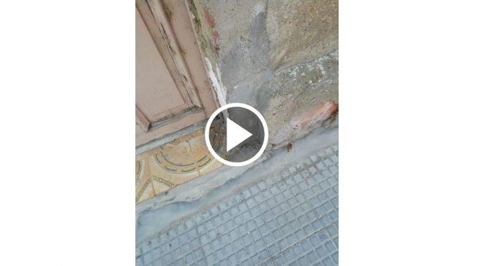 plaga de hormigas en un barrio de león