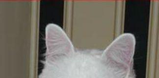 gato perdido Risto