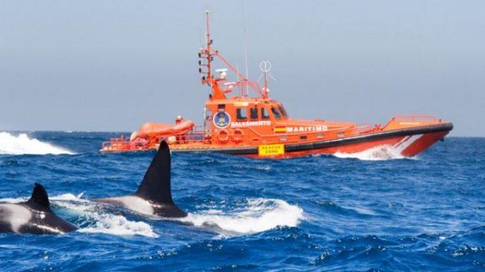 orcas galicia