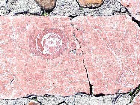 alternativa-ocio-ruta-fosiles-urbanos