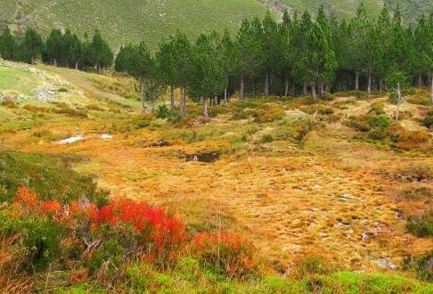turberas León bosque pasado