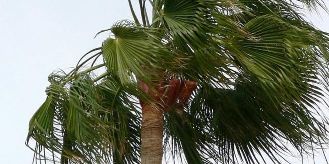 alerta-rachas-viento-fin-semana