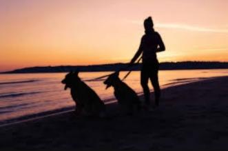 consecuencias-perros-toque-queda