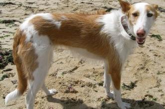 maltrato-animal-perrera-clandestina2