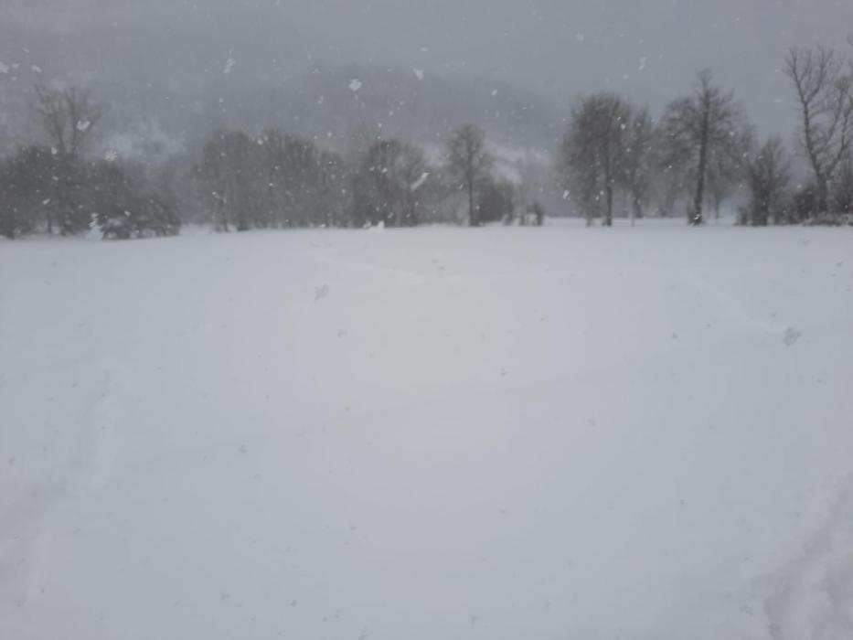 tomenta de nieve