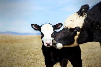 la universidad de LEon investida el bienestar animal