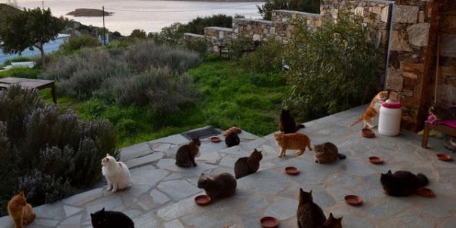 casa gratis sueldo gatos