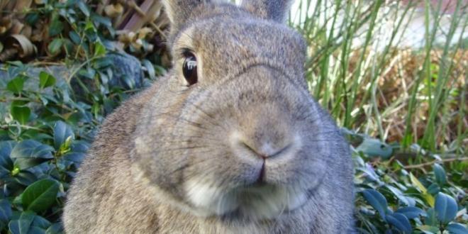 ataque conejos telecomunicaciones