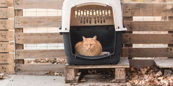 colonias gatos san andres