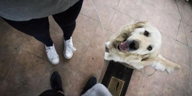 custodia mascotas