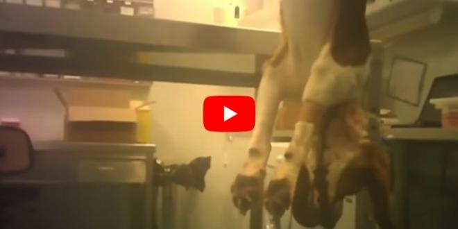maltrato-animal-laboratorio