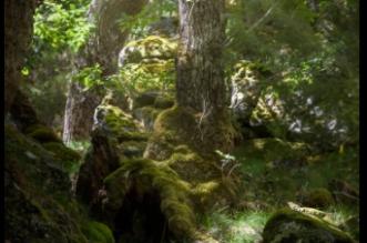 ruta bosque de las hadas