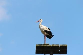 actividades dia mundial aves migratorias