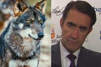 suarez quinones expansion lobo