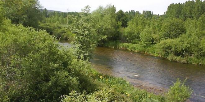 cadaver rio magdalena